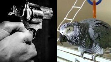 Nie mogli odkryć, kto stoi za zabójstwem mężczyzny. Jednak kiedy posłuchali domowej papugi, cała prawda wyszła na jaw