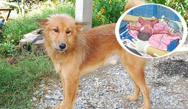 Pui często uciekał z domu i grzebał w śmietnikach. Pewnego dnia przyniósł do domu worek, jego zawartość poruszyła wszystkich domowników