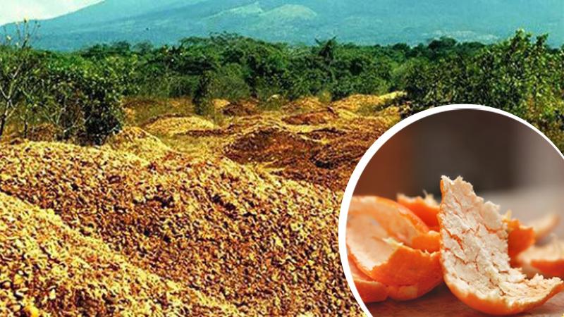 Wyrzucili 12 tysięcy ton skórek z pomarańczy do lasu tropikalnego. Po 16 latach nie mogli poznać tego miejsca