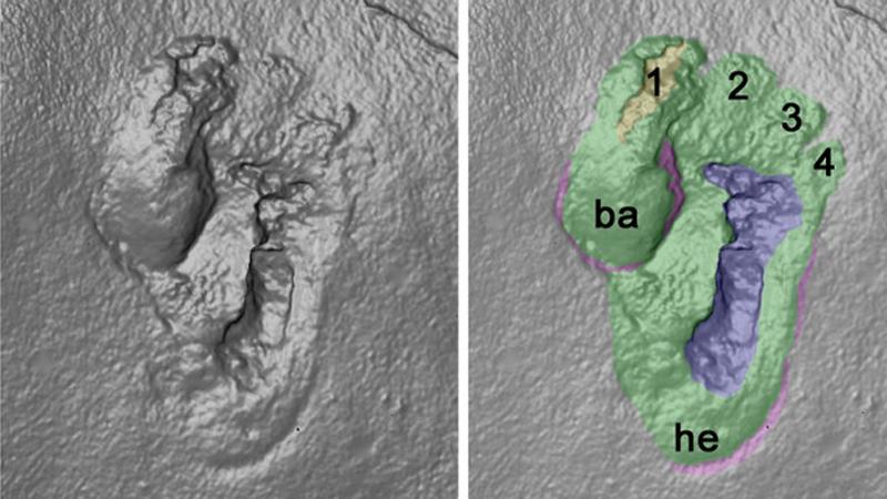 Polscy paleontolodzy okryli ślad praczłowieka! To znalezisko zmienia wszystko, co do tej pory ustaliła nauka o pochodzeniu Homo Sapiens!