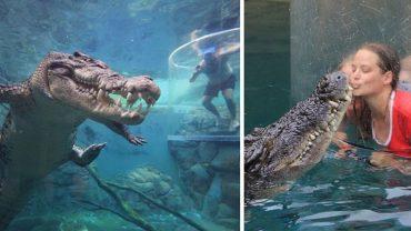 Szukacie mocnych wrażeń? Kąpiel z kilkumetrowym krokodylem na pewno Wam ich dostarczy! Skok adrenaliny gwarantowany