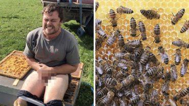 Co bylibyście w stanie zrobić, by dostać 650 dolarów? Ten facet zgodził się usiąść gołymi pośladkami na ulu pełnym pszczół!