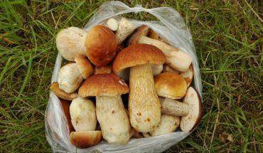 Specjaliści alarmują: nie zbierajcie grzybów do reklamówek! Konsekwencje dla zdrowia mogą być opłakane