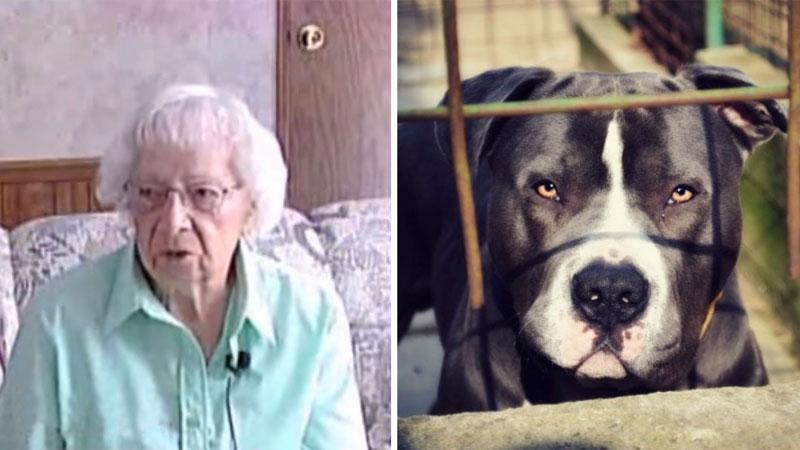 97-letnia Sophie pielęgnowała ogród i nagle zaatakowały ją 4 pit bulle! Gdy seniorka żegnała się z życiem, do akcji niespodziewanie wkroczył...