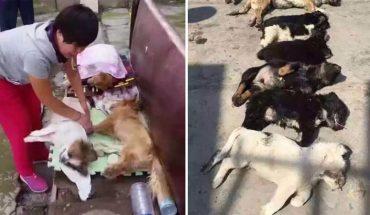 Zhao niemal pękło serce, gdy odkryła, że ktoś otruł przygarnięte przez nią psy! Informacja, kto i dlaczego zamordował zwierzęta, zadziwiła wszystkich