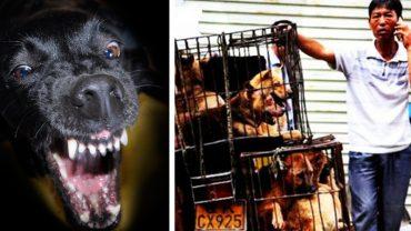 Psy przeznaczone na rzeź zagryzły 6 oprawców! Zwierzęta miały trafić na talerze w chińskiej restauracji