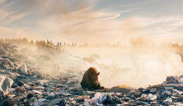 To zdjęcie niedźwiedzia na dymiącym wysypisku śmieci wyraża więcej niż tysiąc słów. Kiedy ludzkość wreszcie zrozumie, że zamienia planetę w ruinę?