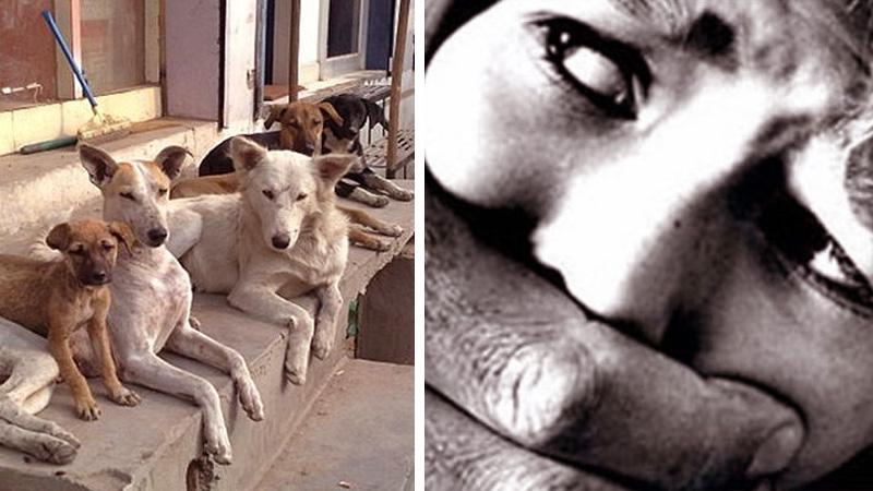 Błagała o pomoc, jednak przechodnie ją zlekceważyli. Przed tragedią uratowały ją psy!