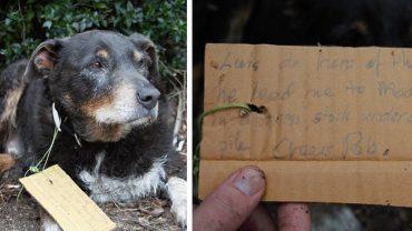 Nie wiedzieli, gdzie cały dzień przebywał ich pies, dopóki nie znaleźli wiadomości na jego obroży. Natychmiast złapali za telefon!