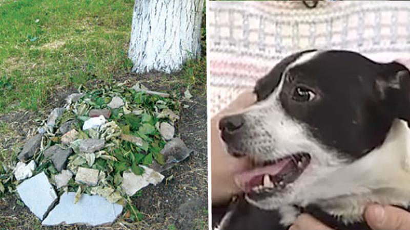 Rodzina pochowała martwego psa. 14 godzin później znów stał pod ich drzwiami!