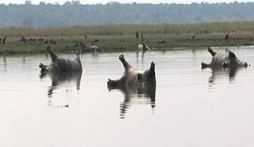 Dekadę temu wąglik siał przestrach wśród Amerykanów, teraz uderzył w Afrykę. Podstępna choroba uśmierciła 100 hipopotamów! Zdjęcia mówią same za siebie