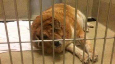Śmierć właściciela uratowała temu psu życie. Choć opiekun nigdy nie stosował wobec niego przemocy, to zwierze było bliskie końca…