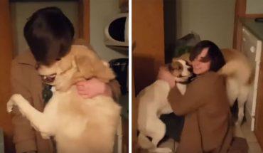Te psiaki nie widziały swojego właściciela aż przez 10 miesięcy, a ich radość po jego powrocie rozczuli każdego