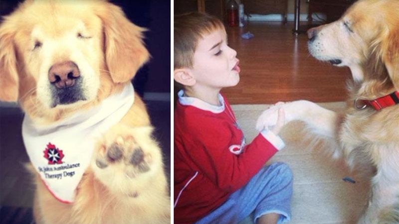 Smiley urodził się bez oczu, ale za to z sercem pełnym miłości do ludzi. Ten psi terapeuta jest jedyny w swoim rodzaju!