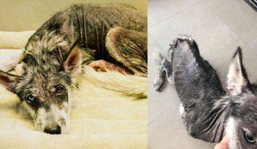 Uratowana Luna przeszła długą drogę do zdrowia i szczęścia, choć początkowo dawano jej małe szanse na przeżycie
