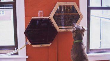 Pewna firma taka bardzo przejęła się losem pszczół, że wynalazła sposób na instalowanie uli w domach. Ich konstrukcje są lepsze niż akwaria