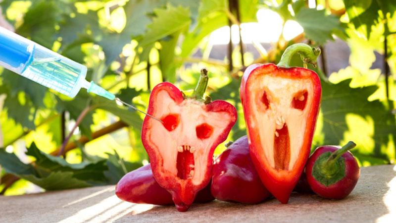 Czy produkty GMO to faktycznie samo zło?Poznajcie prawdę o transgenicznej żywności!