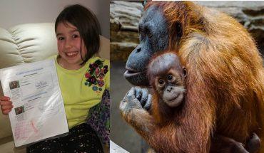 8-latka bez wahania zrezygnowała ze słodyczy, by ratować orangutany i edukować innych o szkodliwości oleju palmowego