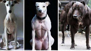 Podejrzewano, że te psy są przerobione w Photoshopie. Prawda okazała się bardzo przerażająca!