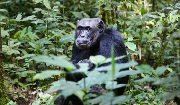 Małpy na skutek działania pestycydów zmieniają się w mutanty! Co będzie z ludźmi?