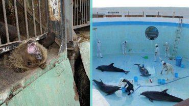 7 niepokojących zdjęć z zoo, które personel wolałby utrzymać w tajemnicy. To dzieje się na naszych oczach