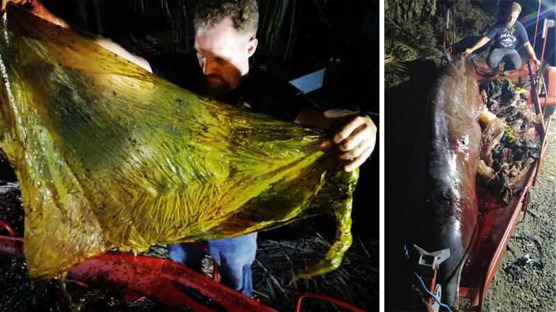U wybrzeży Filipin znaleziono skrajnie wycieńczonego wieloryba. Zmarł parę dni później, a z jego brzucha wyciągnięto TO