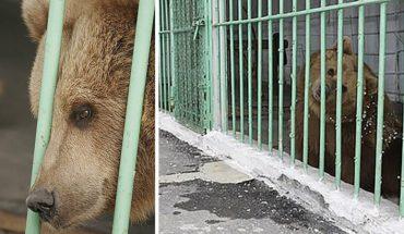 Niedźwiedzica od 15 lat siedzi w więzieniu o zaostrzonym rygorze. Chciałoby się, żeby to był żart