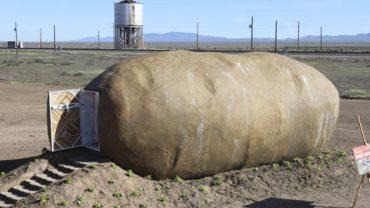 Myślisz, że to zwykły ziemniak? Jego wnętrze kryje pewną niespodziankę, która może zwalić z nóg!