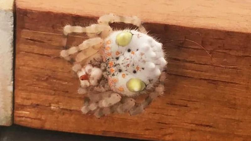 To sushi, a może kosmita? Internauci zachodzą w głowę, co przypomina to przedziwne stworzenie
