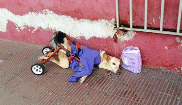 Zostawili ją chorą na ulicy z połamanym wózkiem inwalidzkim i torbą pieluch. Pozbyli się problemu