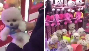 Żywe szczeniaczki w chińskiej maszynie z zabawkami. Te zwierzęta przeżyły horror!