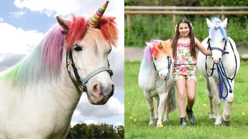 Przerabiają konie na jednorożce, by zadowolić dzieci! Ludzie są oburzeni, jednak czy słusznie?