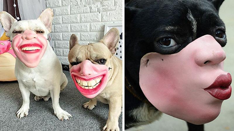 Kagańce dla psów, które wyglądają jak ludzkie twarze. Te obrazki będą was nękać po nocach!