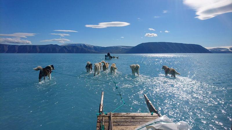 Psy nie nauczyły się chodzić po wodzie. To zdjęcie to namacalny dowód potężnych zmian klimatu!