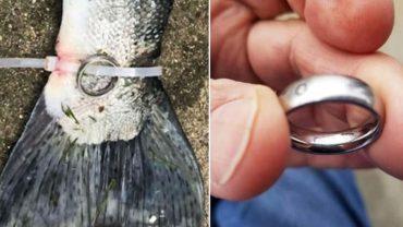 Tajemnica ryby z obrączką na ogonie wreszcie rozwiązana! Jej posiadacze mogą mieć powody do zmartwień