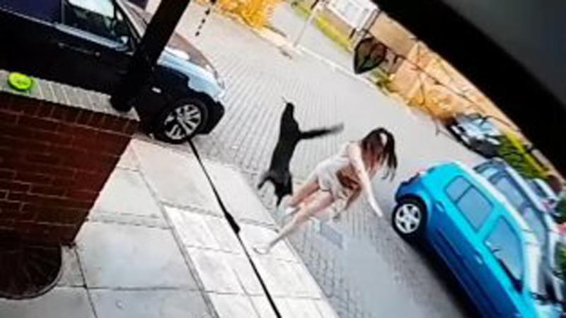Wściekła kobieta rzuca kotem w drzwi sąsiada! Nie chciała, aby zwierzak wchodził na jej ogród