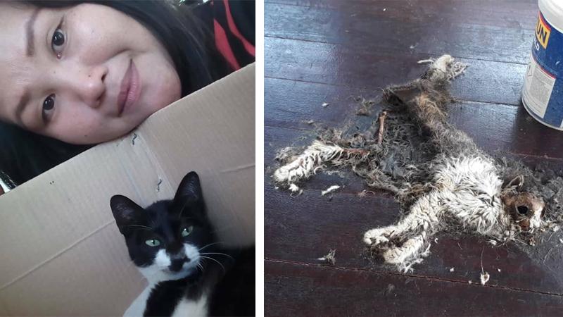 Zbierała na schronisko, by wypchać sobie portfel. Zwierzęta umierały, gniły i rozpadały się na jej oczach