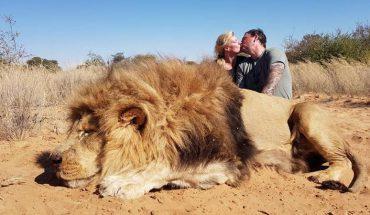 """Para całuje się po zabiciu majestatycznego lwa. Twierdzą, że są """"namiętnymi ekologami"""""""