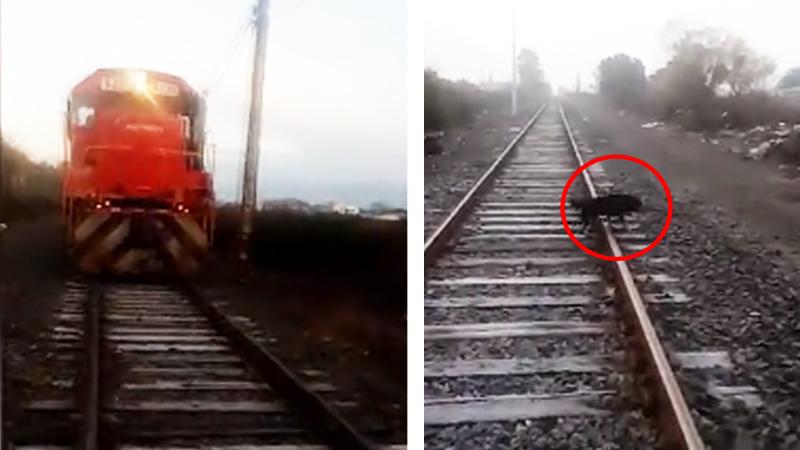 Przywiązali psa do torów, aby rozjechał go pociąg! Podłość ludzka nie zna granic…