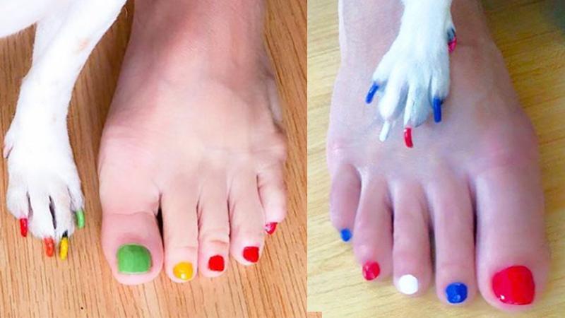 Właścicielki malują psom paznokcie tak samo, jak sobie! Najnowszy trend zdobywa turbo popularności w sieci