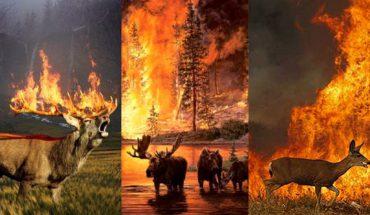 Tysiące zwierząt żywcem płonie w lasach Amzonii i Syberii! Czy to koniec otaczającego nas świata?