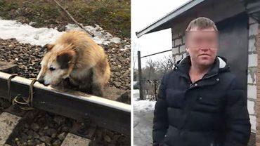 """""""Przeżył sam siebie"""" – właściciel przywiązał psa do szyn, aby się go pozbyć"""