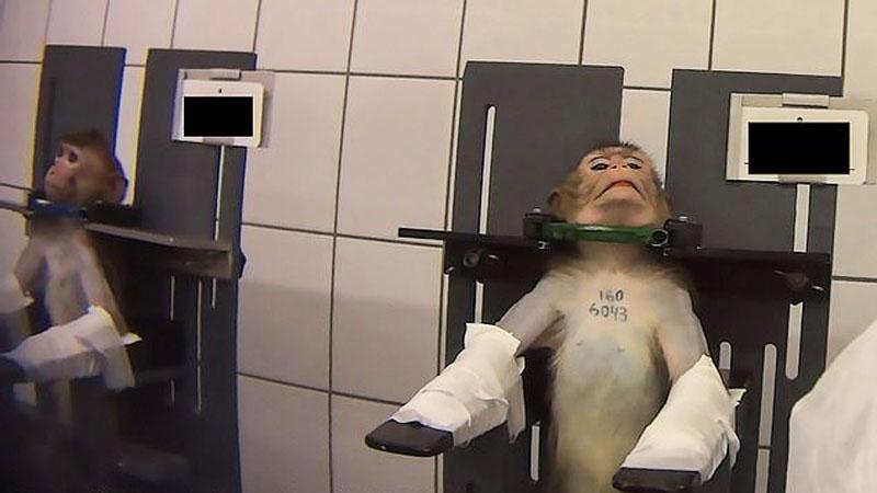 Tajne śledztwo ujawnia TYRANIĘ w niemieckim laboratorium. Małpy krzyczą z bólu, a psy wykrwawiają się na śmierć